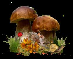 Logo_Grzybno